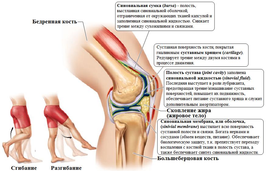 артропатия коленного сустава у детей симптомы
